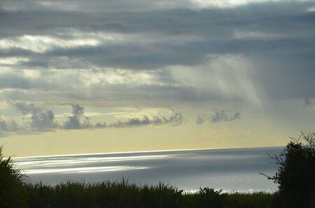 Sunlight Sea Field