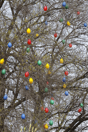 colorful balloons into the tree as food photo