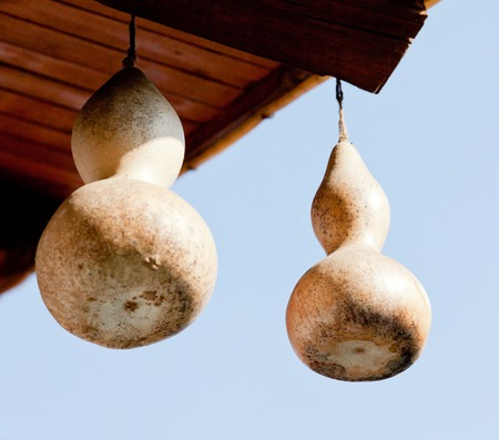 gourds: two bulgarian gourds hanging below the canopy