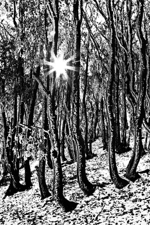 snowscape: Sun rays in winter forest Stock Photo
