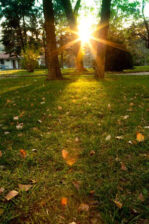 Forêt ensoleillée au début du coucher du soleil, contre-jour Banque d'images - 50338533