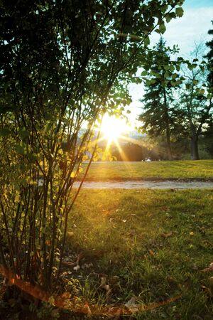 Coucher du soleil dans le parc Banque d'images - 50338105