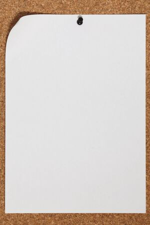 tack: Blank sheet of paper. Paper page with curl and tack.
