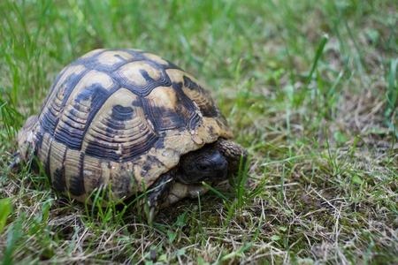 retreats: turtle in the grass