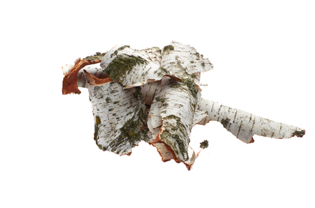 Birch bark on white isolated background