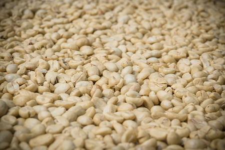 unroasted: Unroasted coffee beans close up shot show details and texture of white organic coffee beans.
