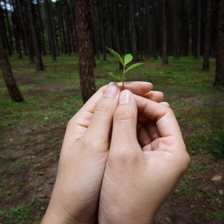 conservative: Hands holding small plant show conservative idea with pine tree background.