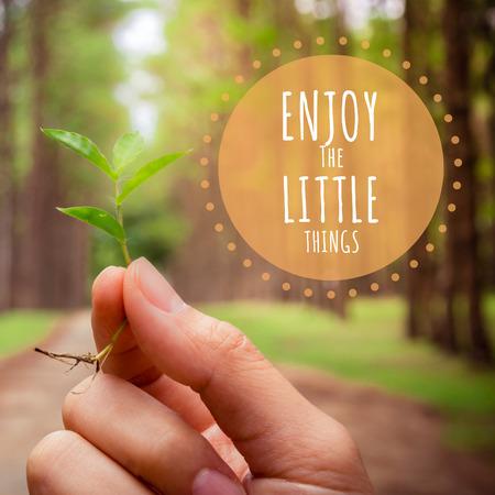 crecimiento planta: Cita inspirada en Manos que sostienen la pequeña planta muestran idea conservadora con el fondo de árbol de pino.