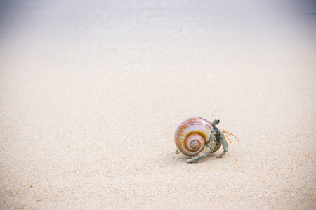 Hermit crab walking along beach with waving sea blurry background.