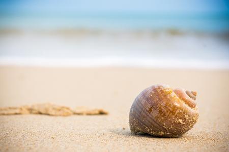 ヤドカリ海ぼやけて背景を振ってビーチに沿って歩きます。 写真素材