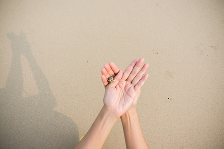 Hands holding hermit crab on beach or bay.