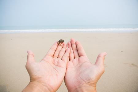 両手ヤドカリをビーチや湾に。
