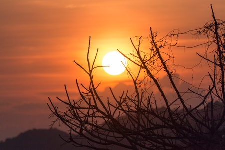 暖かい色プロセスを熱帯の乾燥木の枝の背後に夕日