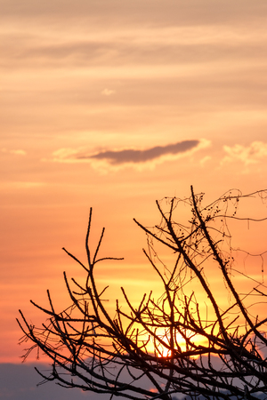 Sunset behind dry tree branch in tropical with warm color process
