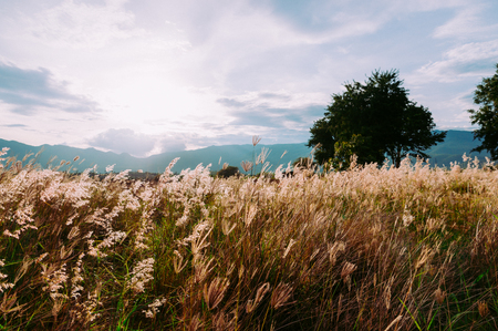Cogon grass field with wonderful mountain ridge and beautiful clouds. vintage color grading style.