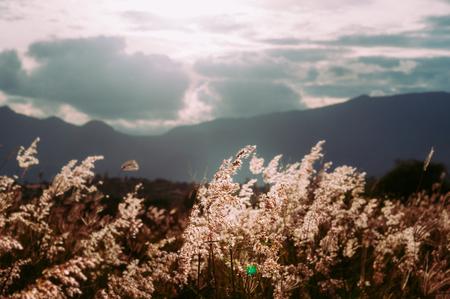 素晴らしい山の尾根と美しい雲コゴン草フィールドです。ビンテージのカラーグレーディングのスタイル。