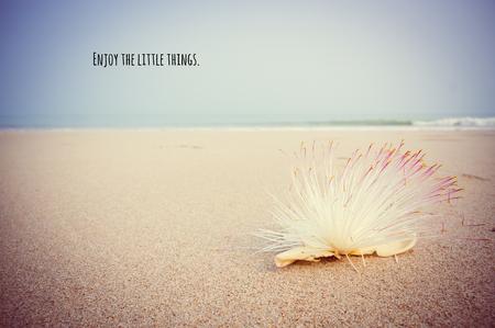ビンテージ、オールディーズ カラーグレーディングとビーチでサガリバナ アジアチカの動機づけと心に強く訴える引用