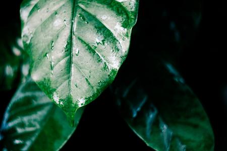 水ドロップとビンテージ フィルター コーヒー葉葉ライン上のパターンを表示します。