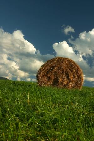 horizont: Summer field with blue sky