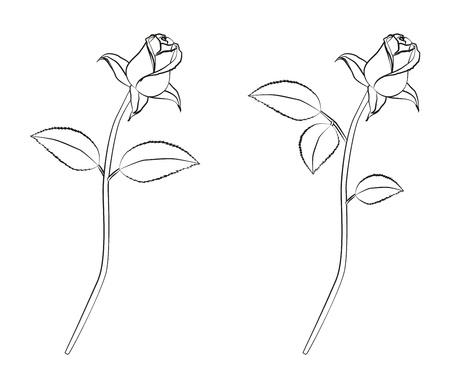 Detailed linework of a rose Illustration
