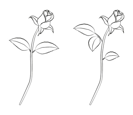 rosebud: Detailed linework of a rose Illustration