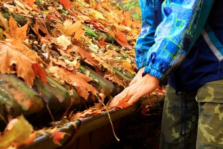 gouttière: Les feuilles sur le toit