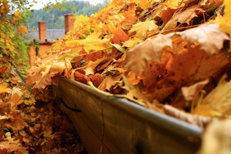 gutter: The leaves on the roof Stock Photo