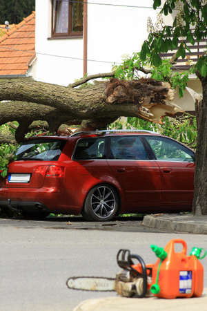Traffic accident on the car fell a tree Stock Photo