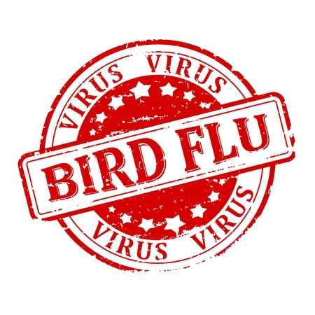 viral strain: Scratched round red stamp with the words - bird flu - virus - vector