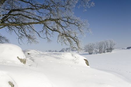 Winter landscape with tree in front of blue sky Stock Photo