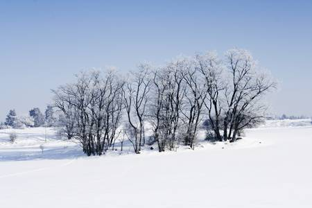 snow mountain: Winter landscape with tree in front of blue sky Stock Photo