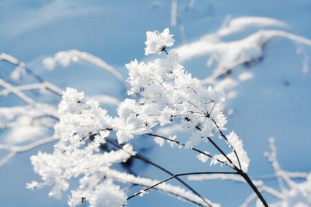 Frost detail in winter weather on blue  sky background Stock Photo