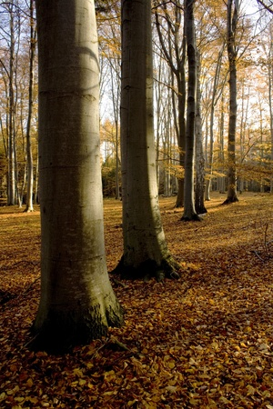 Forest in late autumn day