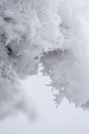 Trees covered with hoarfrost and snow