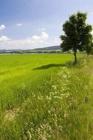 Rural scene with green grass and blue sky