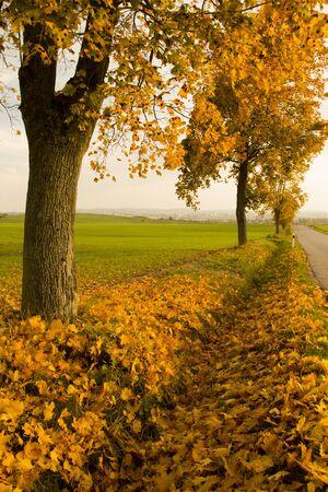 Beuatiful rural ride in autumn time in oak forest Foto de archivo - 132126262