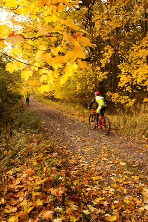 Beuatiful rural ride in autumn time in oak forest 版權商用圖片 - 132126433