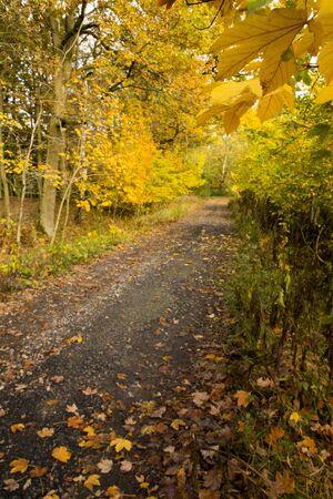 Beuatiful rural ride in autumn time in oak forest 版權商用圖片 - 132126612