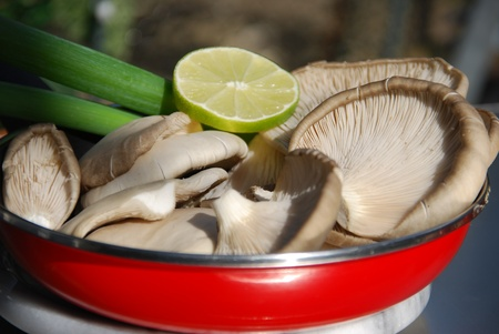 autumn motif: Oyster mushroom Pleurotus ostreatus Stock Photo