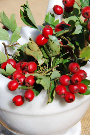 heart drug hawthorn berries photo