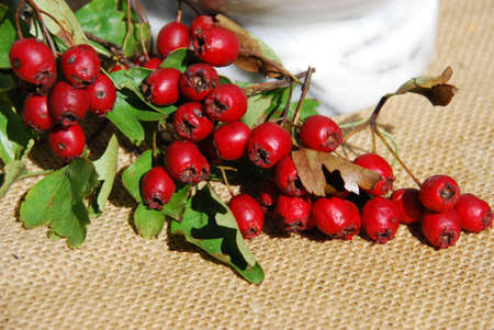 heart drug hawthorn berries