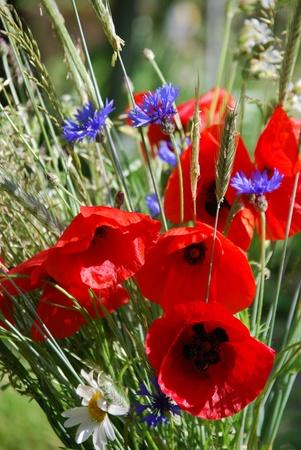 midsummer: field bouquet