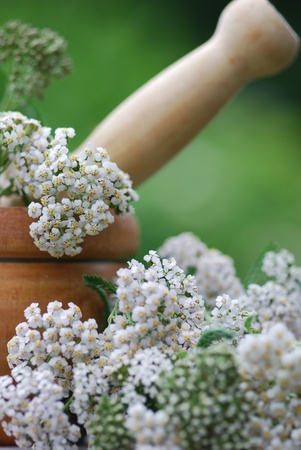 achillea millefolium herb medicine Stock Photo