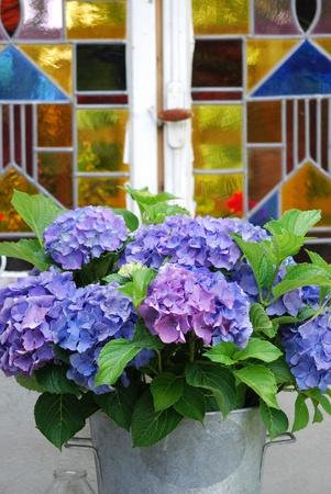 floral window hydrangea flowers photo