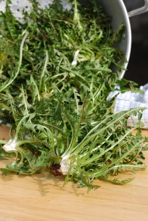 dandelion salad preparation