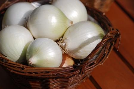 alliaceae: onion varieties