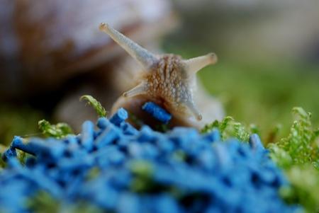 graining: Snail venom granules Stock Photo