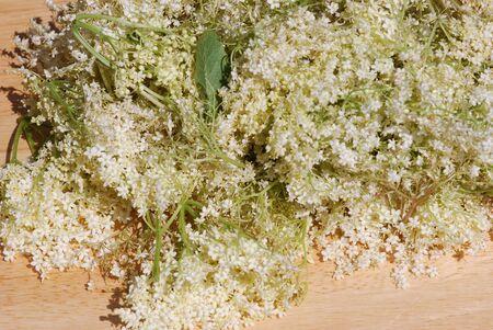 allow: Elderflower allow to dry medicinal Plants