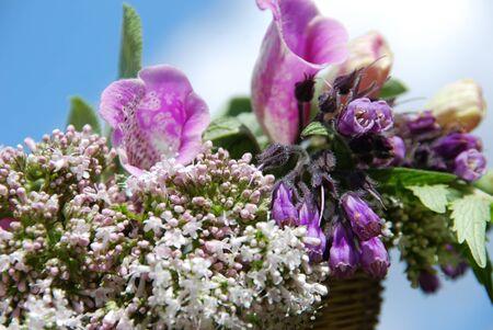 symphytum officinale: Piante medicinali Bouquet