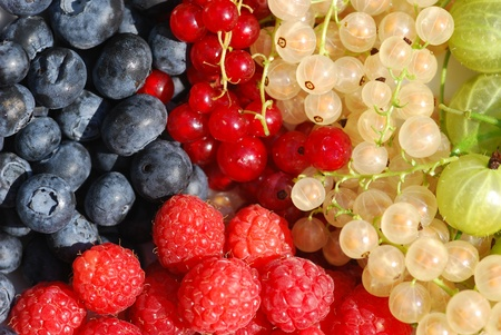 Variety of organically grown berries